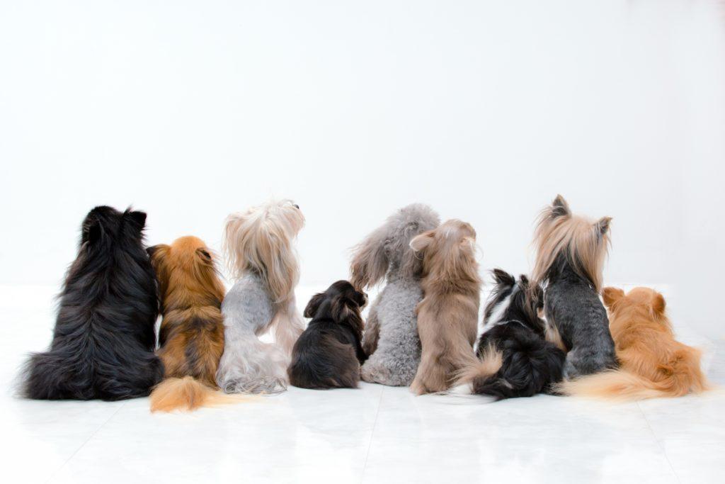 犬と暮らす生活にフロアコーティングと消臭コーティング